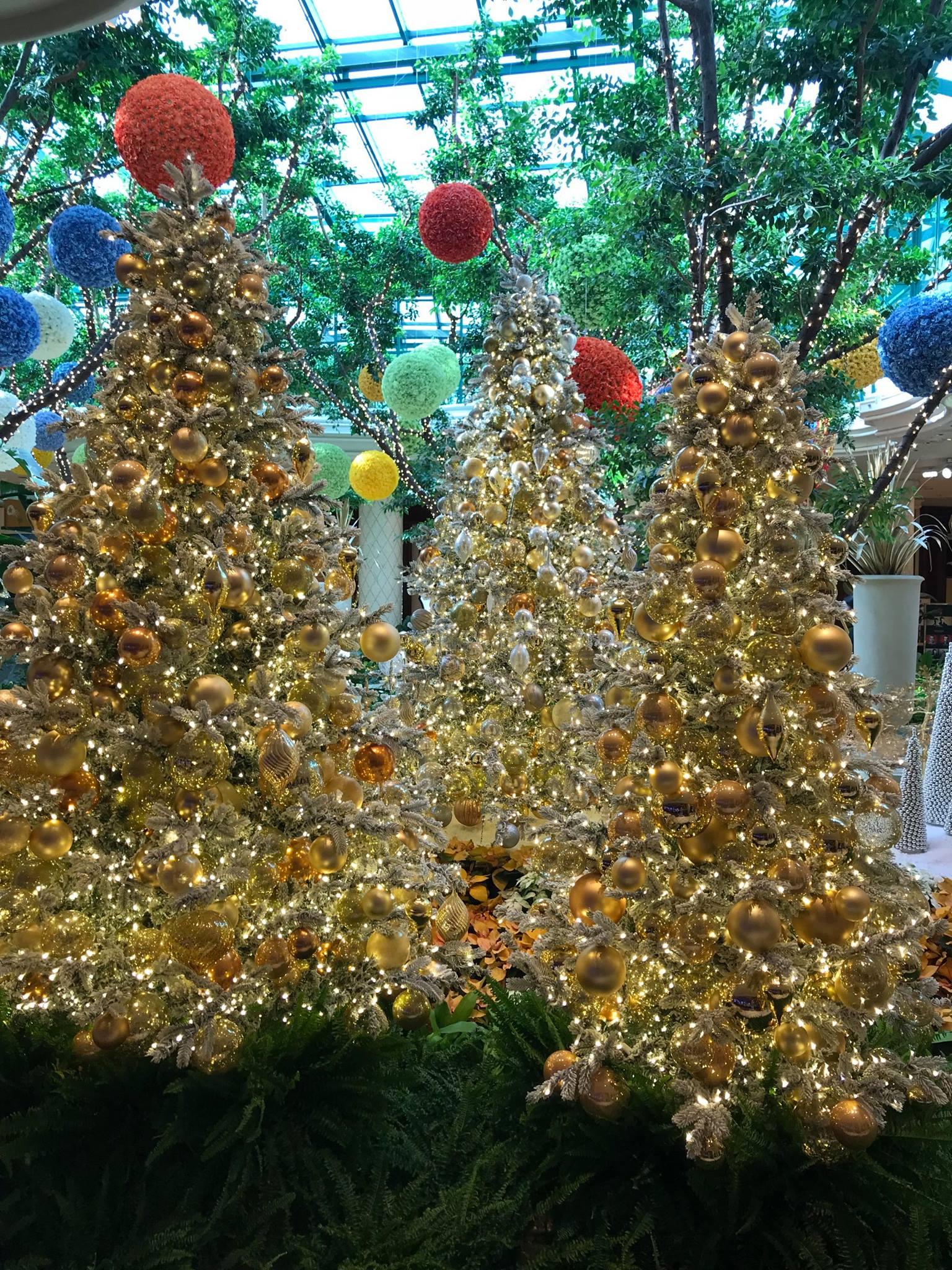 Photograph of Christmas trees